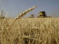 Конкуренция со стороны Украины может вынудить Россию сократить экспорт зерна