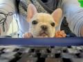 Собачье дело: Четыре бизнес-урока от четвероногих друзей
