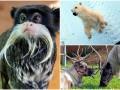 Животные недели: мартышка-хипстер, добрый белый мишка и олени Санты