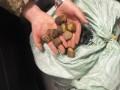 Украинец пытался вывезти в ЕС 55 кг янтаря