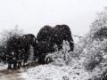 В Африке выпал снег: слоны и жирафы бродят по сугробам