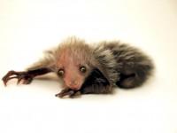 Очень редкое животное родилось в американском зоопарке