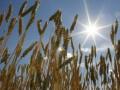 Власти существенно понизили прогноз по экспорту украинского зерна