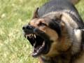 В России бешеная собака искусала 17 человек