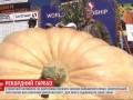На фестивале в США показали тыкву весом 984 кило
