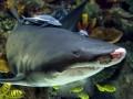 Акула из Океан Плаза испугала посетителей (ВИДЕО)