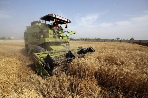 Квоты на экспорт пшеницы в ЕС использованы