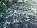 В Винницкой области в водохранилище массово вымерла рыба