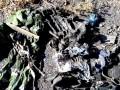 Поисковики нашли останки украинских десантников на Донбассе