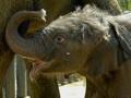 Браконьеры в Кении убили 11 слонов и отрезали им бивни