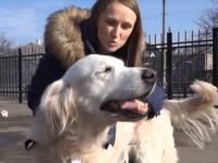В Мариуполе собака Элли работает психологом для пожарных