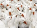 В Черкасской области два работника птицефабрики отравились моющим раствором