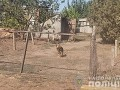 Житель Запорожской области натравил на оперативников злую собаку