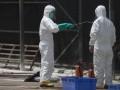 В Черновицкой области зарегистрировали вспышку африканской чумы