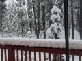 Аномалия августа: При +20 выпал снег в Канаде