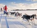 Собачьи упряжки признали видом транспорта в Дании