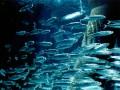 Меньшее зло: Украина и Россия распределят квоты на вылов рыбы в Азове