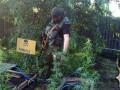 В прифронтовой Авдеевке коноплю замаскировали под мины