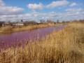 В Черниговской области озеро внезапно стало розовым