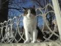 От неожиданного тепла в Украине пострадали коты – синоптик