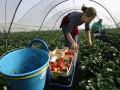 Украинцам в Европе разрешили доносить на своих работодателей