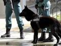 Баски извинились перед жертвами своего террора