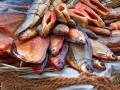 Во Львовской области три человека отравились вяленой рыбой