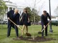 Погиб посаженный Макроном и Трампом дуб