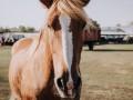 Во Львове запретили катать людей на лошадях