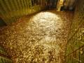Бассейн, как у Скруджа Макдака, выставлен на аукцион