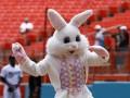В США полиция задержала пасхального зайца, обвинив его в краже DVD