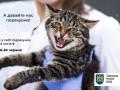 Во Львове впервые в мире подсчитают бродячих котов