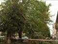 Непогода: Под Львовом ветка дерева убила человека