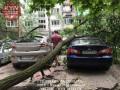В Киеве сильный ветер повалил дерево на авто