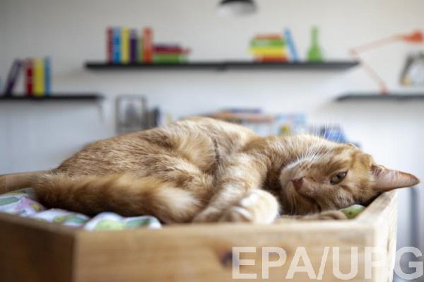 Женщину лизнула и поцарапала кошка, что привело к развитию в организме непоправимых процессов