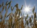 Запасы зерна в Украине выросли по сравнению с прошлым годом на 70%