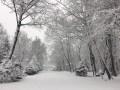 Винницу засыпало снегом