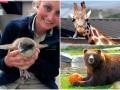 Животные недели: крошка-пингвин, жираф-соблазнитель и медведь с тыквой
