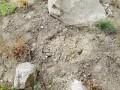 В Подольском районе столицы украли высаженные ели