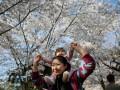 В Китае начался сезон цветения вишни