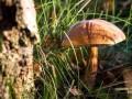 В Кировоградской области девушка умерла от отравления грибами