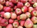 В Беларуси задержали украинца за поставки яблок и помидоров в РФ