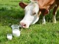 Украинские производители молока теряют доходы