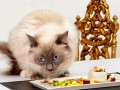 Мажоры кормят котов суши-роллами с икрой белуги (ФОТО)