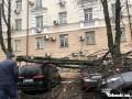 В Одессе упавшее дерево повредило 10 авто