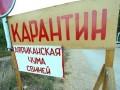 В Киевской области зафиксирована африканская чума свиней