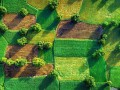 Рынок земли: 3% украинцев сразу продадут свой пай