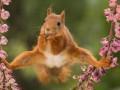 Белка-Ван Дамм и удивленный лемур: самые смешные фото дикой природы