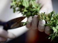 Парламент Канады поддержал легализацию марихуаны