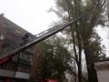 В Днепре восемь спасателей снимали кошку с дерева
